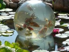 The Amazing Fish Bubble