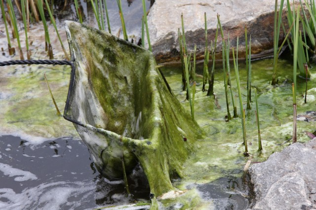 Algae Control Tired of string algae? We have the solution! Come talk to the pond experts.